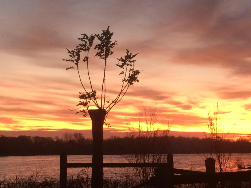 black-tree-and-sun-down